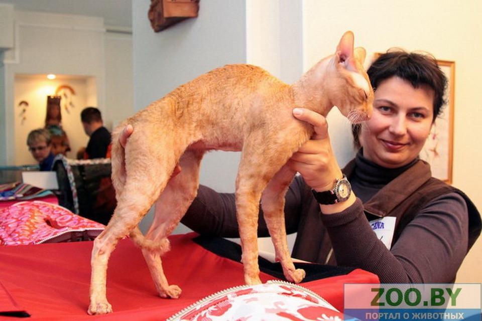 Конкурс фотографий питомцев с выставки кошек на ZOO (3)