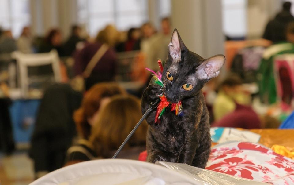 выставка кошек  Харьков 2013