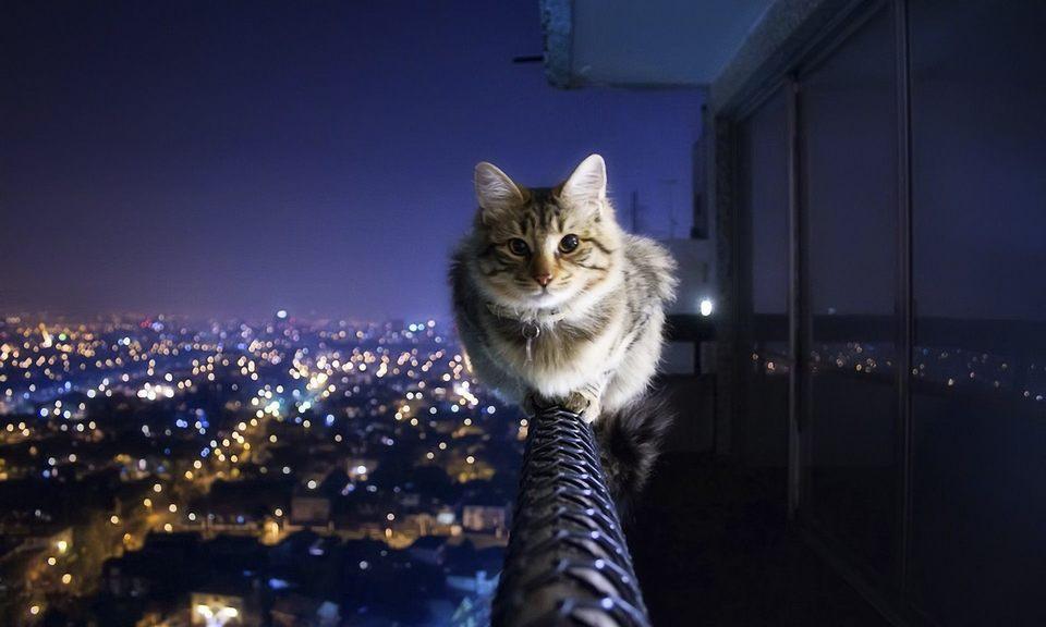 кот на балконе фото (1)