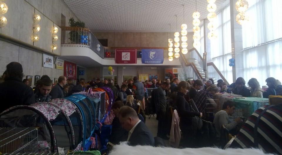 Международная выставка кошек 15-16 октября 2011 (25)