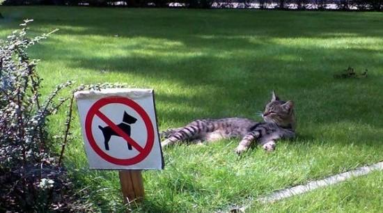 Ветеринары предостерегают